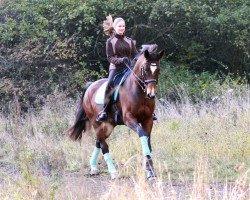 dressage horse Fleur des Printemps (Westphalian, 2005, from Farewell III)