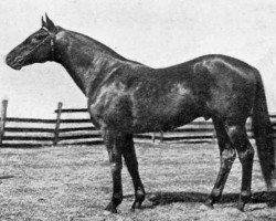horse Sweep xx (Thoroughbred, 1907, from Ben Brush xx)