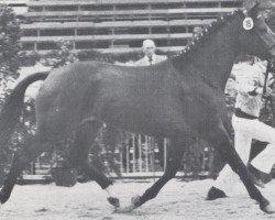 horse Lepanto (Holsteiner, 1976, from Ladykiller xx)