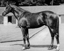 horse Court Martial xx (Thoroughbred, 1942, from Fair Trial xx)