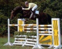 horse Drosselklang I (Hanoverian, 1982, from Don Carlos)