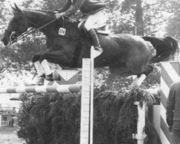 horse Landgraefin 10 (Holsteiner, 1970, from Ladykiller xx)
