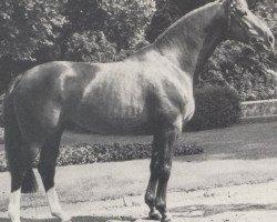 horse Pascal (Westphalian, 1974, from Paradox I)