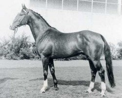 horse Colonel (Holsteiner, 1961, from Cottage Son xx)