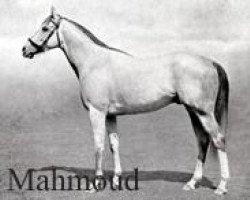 horse Mahmoud xx (Thoroughbred, 1933, from Blenheim II xx)