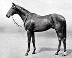 horse Mirza II xx (Thoroughbred, 1935, from Blenheim II xx)
