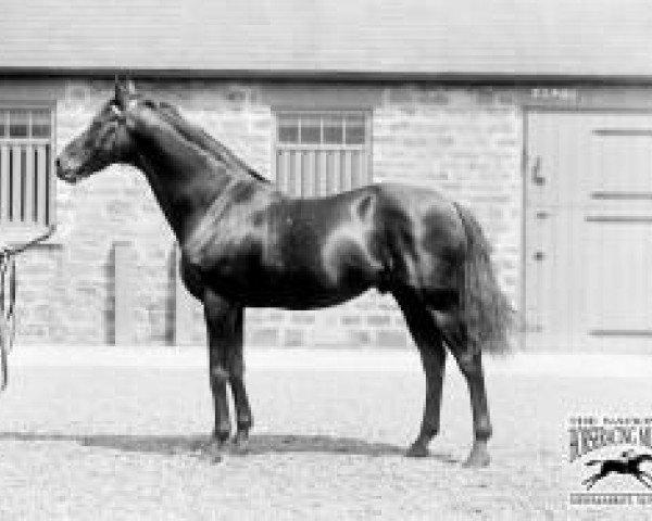 horse Saint Simon xx (Thoroughbred, 1881, from Galopin xx)