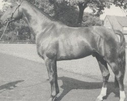 horse Wendelstein (Hanoverian, 1967, from Fernjaeger)