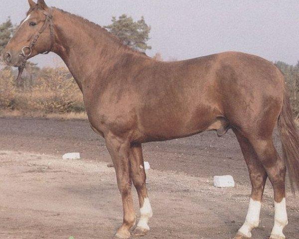 horse Wendel (Hanoverian, 1977, from Wendelstein)