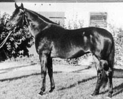 horse Sable Skinflint xx (Thoroughbred, 1958, from Arctic Star xx)