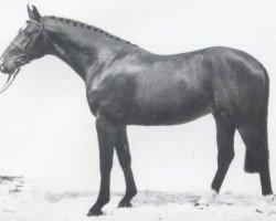 horse Ligorett (Holsteiner, 1986, from Lord 1134)