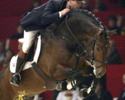 horse Sam R (Royal Warmblood Studbook of the Netherlands (KWPN), 1999, from Mermus R)