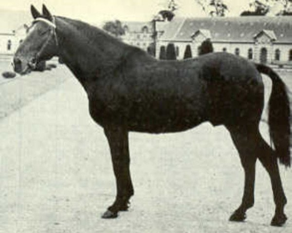horse Herquemoulin (Anglo-Norman, 1951, from Fra Diavolo xx)