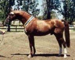 horse Gragenit (Oldenburg, 1989, from Grannus)