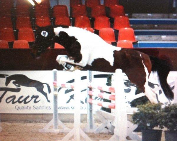 horse Shiraz (Lewitzer, 2009, from Shady Aziz)