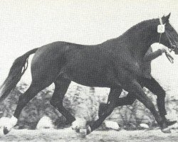horse Milan (Hanoverian, 1966, from Marconi)
