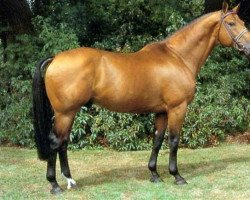 horse Titus (Oldenburg, 1978, from Tiro)