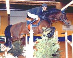 horse Life is Life (Royal Warmblood Studbook of the Netherlands (KWPN), 1991, from Landjonker (Fruhling))