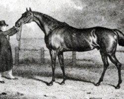 horse Truffle xx (Thoroughbred, 1808, from Sorcerer xx)