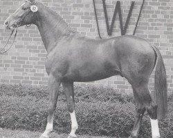 horse Promotion (Westphalian, 1991, from Pit I)