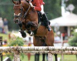 horse Iberio (Württemberger, 1991, from Indigo)