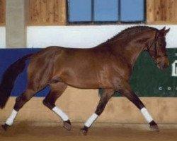 horse Laretto Diavolo (Oldenburg, 1987, from Landadel)