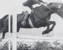 horse Markus (Oldenburg, 1963, from Manolete xx)