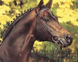 dressage horse Caprimond (Trakehner, 1985, from Karon)