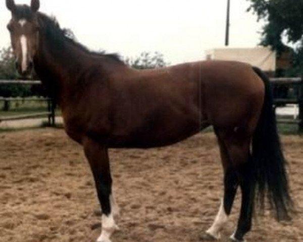 horse Kerrin (Holsteiner, 1973, from Mambo)