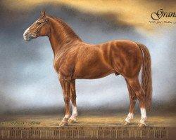 horse Grande (Hanoverian, 1958, from Graf)