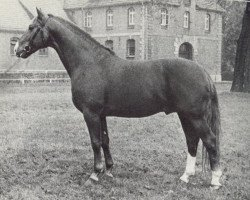 horse Duden II (Hanoverian, 1960, from Duellant)