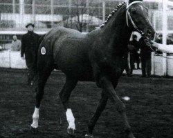 horse Xebec xx (Thoroughbred, 1947, from Flamingo xx)