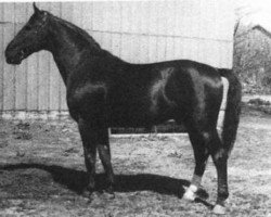 horse Almjaeger I (Hanoverian, 1930, from Alpenflug II)