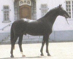horse Pasternak (Rhinelander, 1971, from Patron)