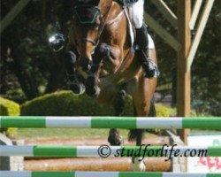 horse Quartier Latin (Oldenburg, 1995, from Quattro B)