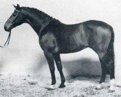 horse Latino (Holsteiner, 1976, from Ladykiller xx)