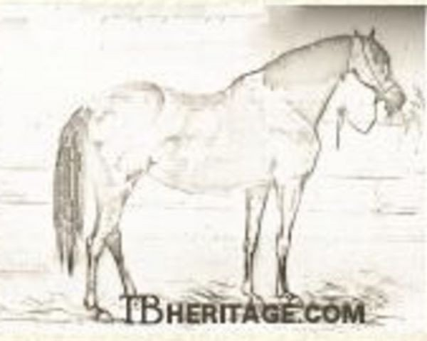 horse Marpessa xx (Thoroughbred, 1830, from Muley xx)