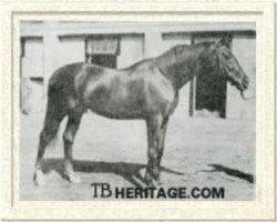 horse Ortello xx (Thoroughbred, 1926, from Teddy xx)