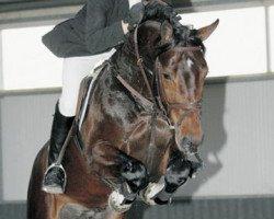 jumper Contendro II (Holsteiner, 2001, from Contender)