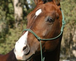 horse Landkönig (Hanoverian, 1992, from Landadel)