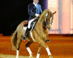 dressage horse Londonderry (Hanoverian, 1995, from Lauries Crusador xx)