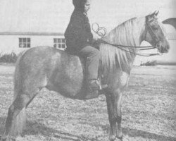 horse Coed Coch Blaen Lleuad (Welsh-Pony (Section B), 1953, from Criban Victor)