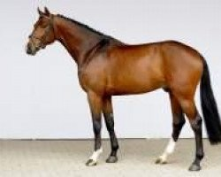 jumper Uriko (Royal Warmblood Studbook of the Netherlands (KWPN), 2007, from Untouchable)