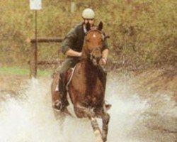 horse Weltrat (Westphalian, 1992, from Weltmeyer)