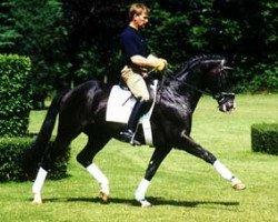 horse Tuareg (Trakehner, 1986, from Radom)