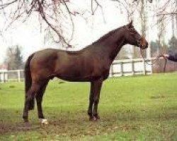 horse Landstreicher (Holsteiner, 1991, from Landgraf I)