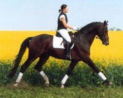 horse Regardez (Hanoverian, 1996, from Regazzoni)