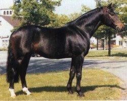 horse Rapallo (Westphalian, 1983, from Romadour II)