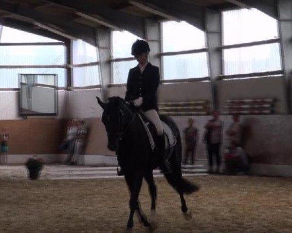 dressage horse Mc Fly High D (German Riding Pony, 2008, from Mr.Hale Bob)