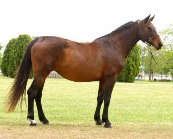 horse Calipa Z (Hanoverian, 1986, from Cor de la Bryère)